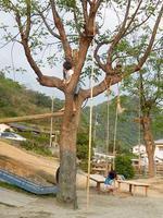 木登りとブランコ.JPG